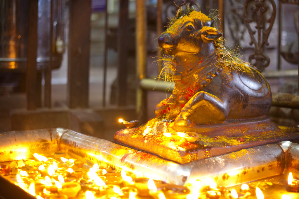 Sculpture of Nandi   ( bull ) and  Candles at Meenakshi hindu temple in Madurai, Tamil Nadu